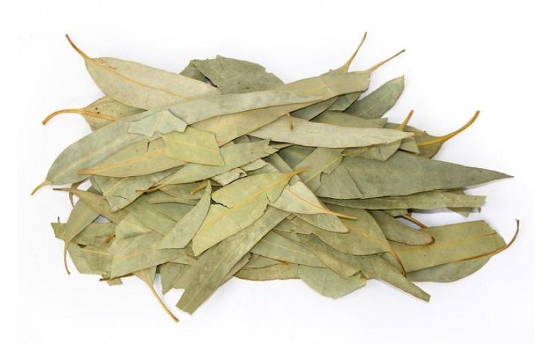 Эвкалипт (лист 40 гр)